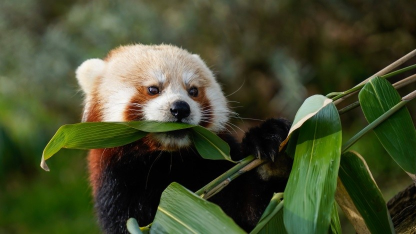 Der Firefox wird FTP endgültig entfernen.