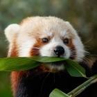 Mozilla: Firefox soll FTP endgültig rausschmeißen