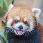 Browser: Firefox bringt Quic und HTTP/3