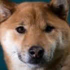 Dogecoin: Anleger wollen den 20. April zum Doge-Day machen