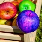 Wochenrückblick: Bunte Äpfel im Angebot
