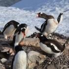 Linux: Greg Kroah-Hartman lehnt Entschuldigung ab