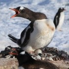 Linux: Linux Foundation fordert Offenlegung