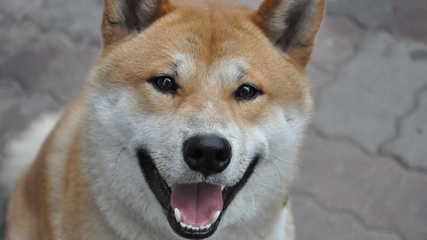 Der Shiba Inu ist das offizielle Maskottchen des Dogecoin.