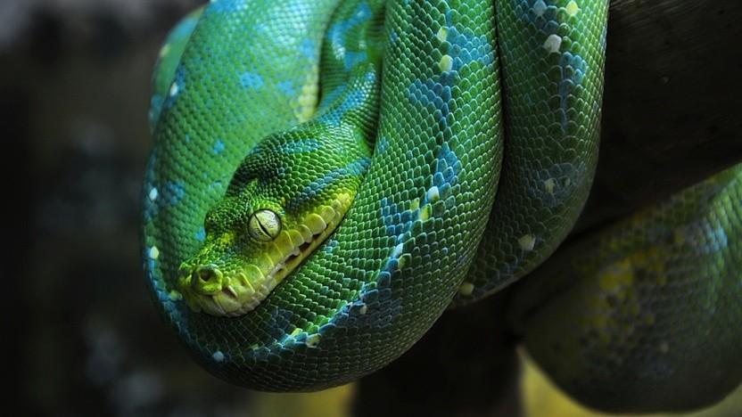 Python soll schneller werden.
