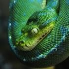 Guido van Rossum: Python-Gründer will doppelte Geschwindigkeit für die Sprache