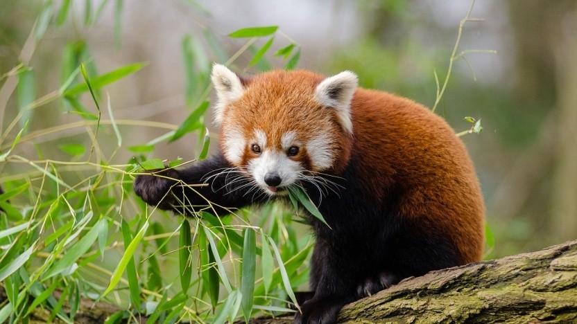 Das Firefox-Team findet und behebt jetzt einfacher Fehler in seinen Abhängigkeiten.