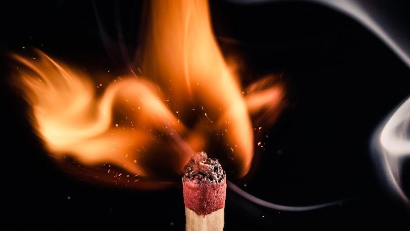 Pytorch entflammt