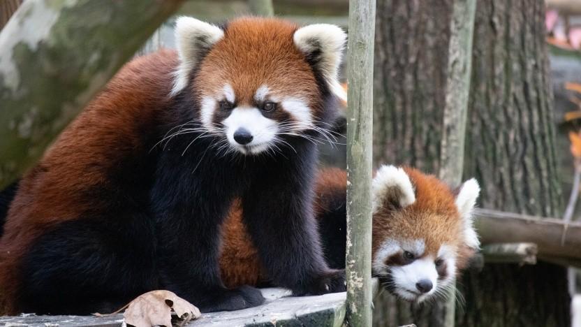 Der Firefox-Browser soll das Manifest v3 nutzen.