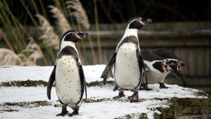 Die Linux-Kernel-Entwicklung basiert immer noch hauptsächlich auf E-Mail.