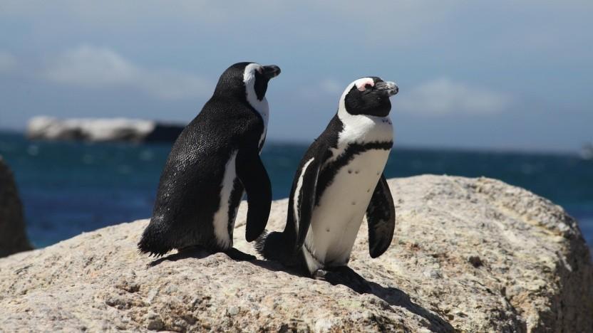 Der Linux-Kernel reserviert Speicherbereiche, um Fehler zu vermeiden.