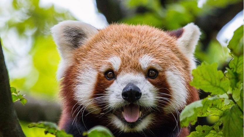 Im Firefox-Browser gibt es erneut Experimente für Werbung.