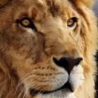 Betriebssystem: Apple erlaubt Download von Mac OS X Lion und Mountain Lion