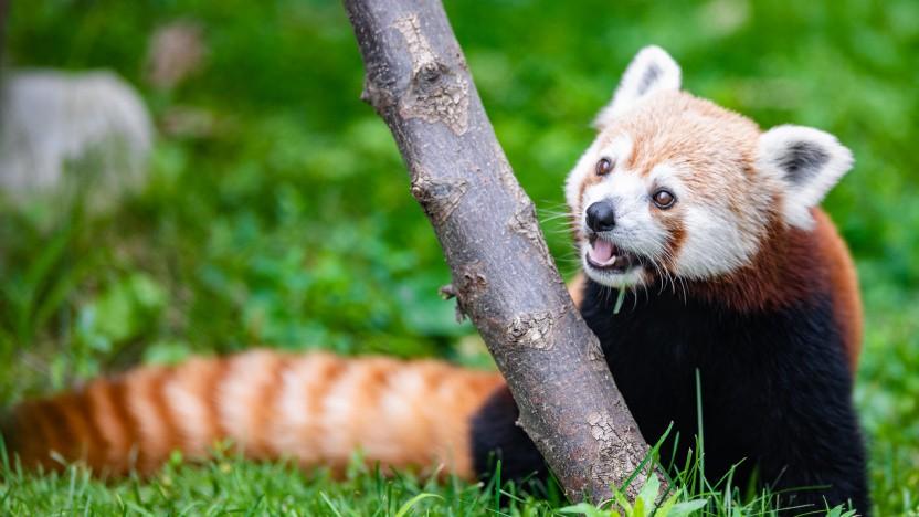 Der Firefox nutzt künftig DoH standardmäßig auch in Kanada.