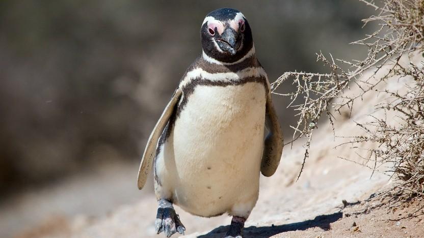 Der Linux-Kernel könnte einen neuen NTFS-Treiber bekommen.
