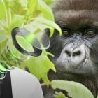 Smartphones: Cornings neues Gorilla Glass lässt mehr Licht zu Kameras