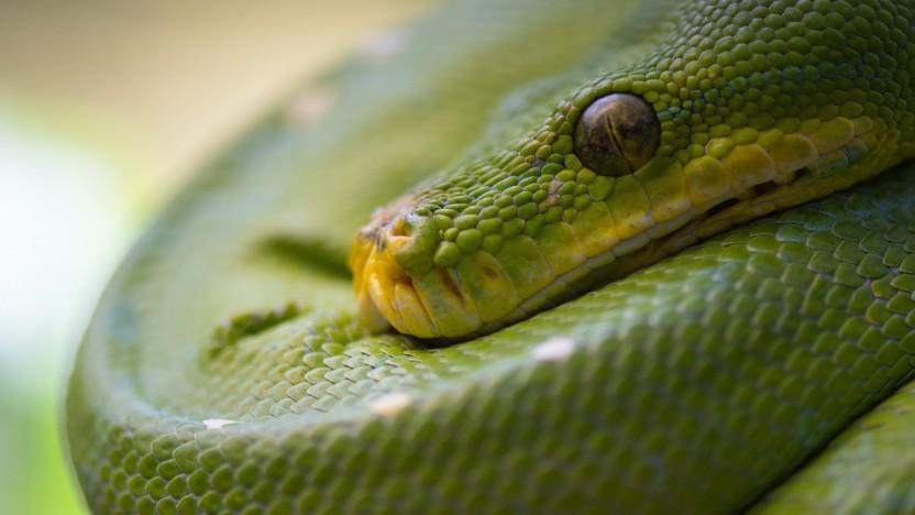 Anzeige: Python-Trainings für Einsteiger und Fortgeschrittene