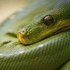 Python-Trainings für Einsteiger und Fortgeschrittene