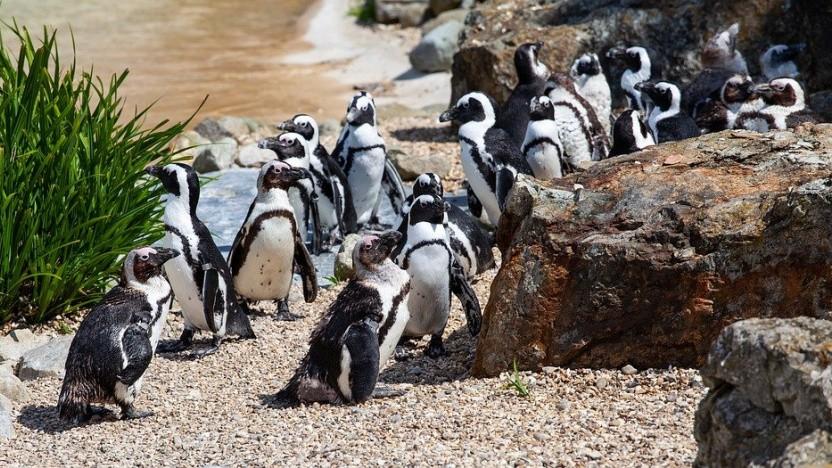 Die Security des Linux-Kernels sorgt immer wieder für Diskussionen.