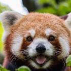 User-Agent Firefox/100.0: Firefox-Version 100 könnte zu Problemen führen