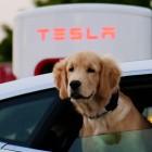 Öffnung für andere Marken: Tesla will Supercharger-Netzwerk stark ausbauen