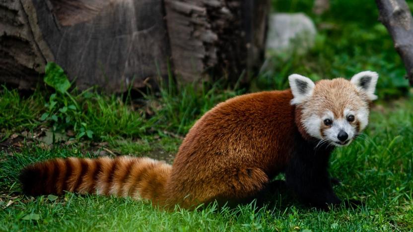 Firefox 92 ist erschienen.