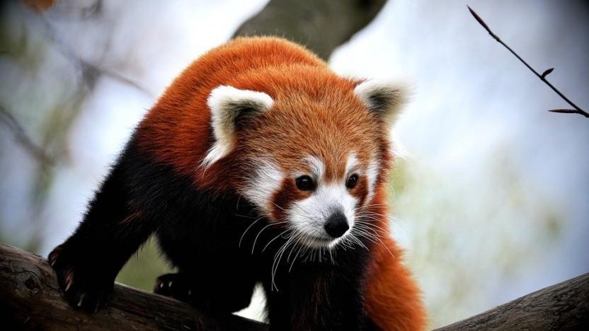 Firefox-Macher Mozilla experimentiert wieder mit Werbeinhalten im Browser.