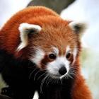 Mozilla: Firefox zeigt Vorschläge und Werbung in der URL-Leiste