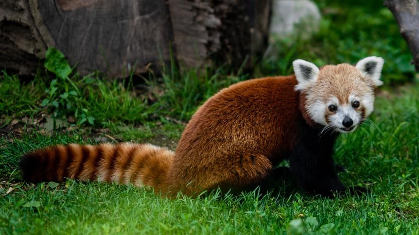 Mozilla sieht sich nach anderen Suchoptionen in Firefox um.