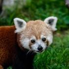 Suchmaschine: Mozilla testet Bing als Suche im Firefox-Browser