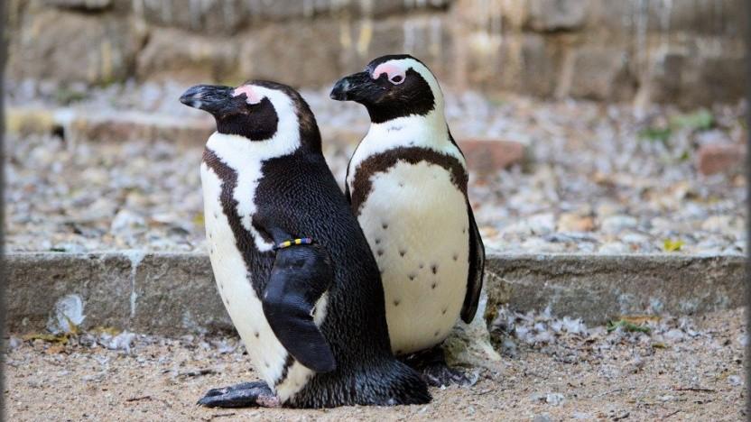 Die Sicherheit von Linux-Systemen ist im Vergleich schlechter als unter Windows oder MacOS, glaubt Lennart Poettering.