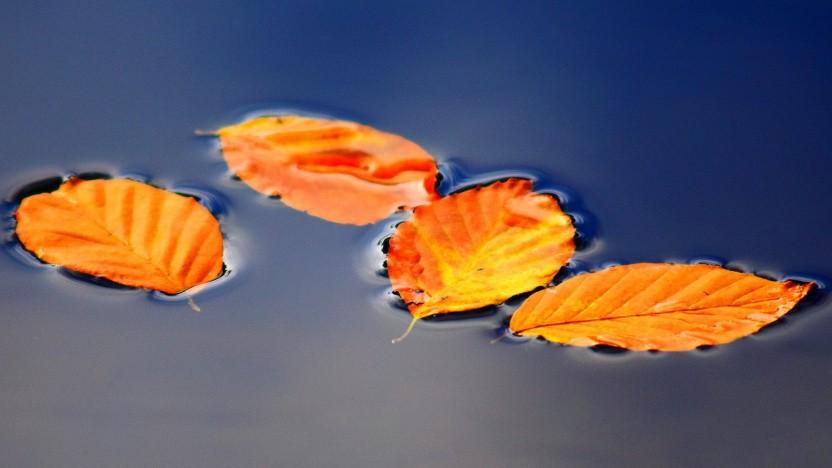 Der Herbst beginnt mit neuer Hard- und Software.