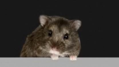 Mr. Goxx: Hamster handelt mit Kryptowährungen und schlägt Aktienindex