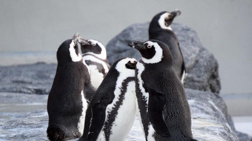 Der Linux-Kernel kann mit Bolt beschleunigt werden.