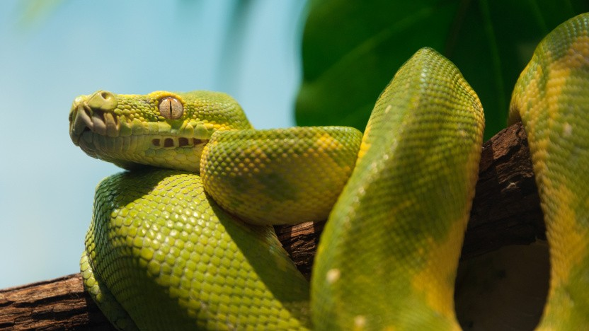 Python schneller ohne Pypy-, Cinder- oder Pyston-Kompromisse
