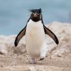 Linux: Der Pinguin kann endlich M1-Mac