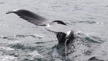 Geschäftsethik bei Videospielen: Auf der Suche nach dem Wal