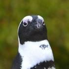 eBPF: Microsoft portiert Sysmon auf Linux