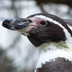 Raven Ridge: Linux-Bootfehler wegen AMDs RAM-Verschlüsselung
