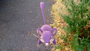 "Rattfratz in ""freier Wildbahn"" (Bild: Golem.de), Pokémon Go"